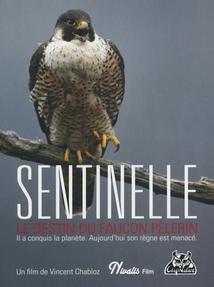 SENTINELLE - LE DESTIN DU FAUCON PÈLERIN