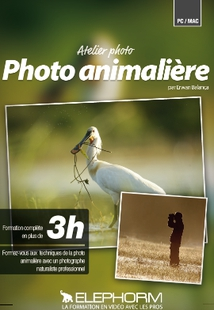 ATELIER PHOTO - PHOTOGRAPHIE ANIMALIERE