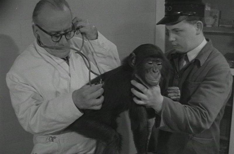 Anvers DVD Zoologie