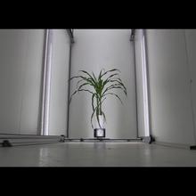 semences du futur 1