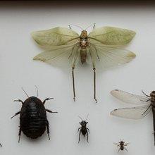 Hexapoda / Insectarium Jean Leclercq - boites entomologiques 1 - Céline Bataille