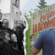 Les Potagistes 5