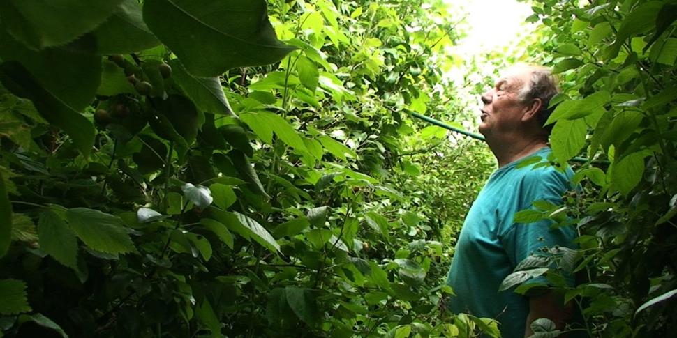 "Gilbert Cardon - ""La Jungle étroite"" (Benjamin Hennot / Gsara)"