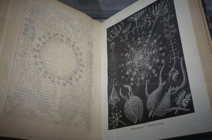 La Fabrique du vivant 1 - Beaubourg - oeuvre de Ernst Haeckel