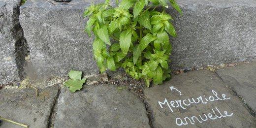 Mercuriale (belles de la rue)