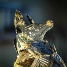 Momie animale du MRAH à Bruxelles - par Alicia Hernandez