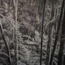 exposition Nous les arbres oeuvre de Cassio Vasconcelos