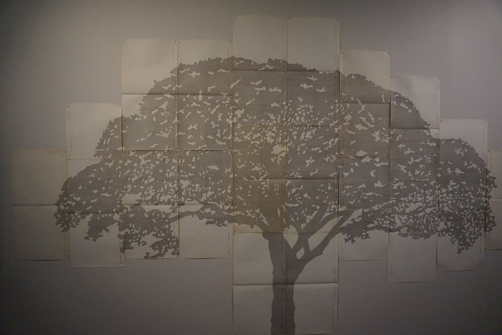 exposition Nous les arbres - oeuvre de Johanna Calle