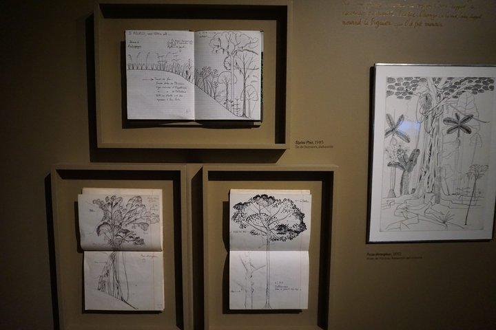 exposition Nous les arbres - carnets du botaniste Francis Hallé