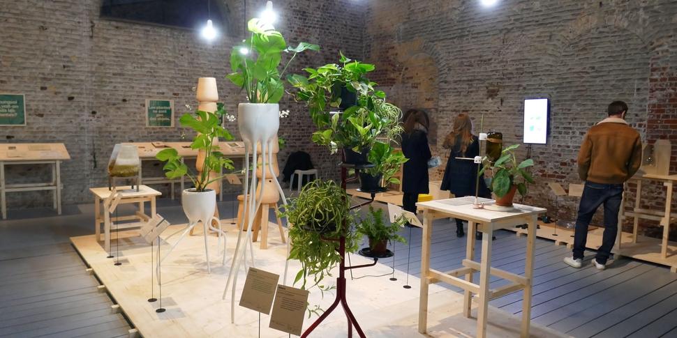 Plant Fever 2.jpg