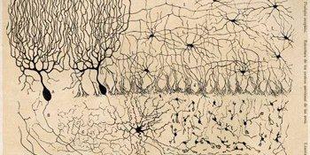 Santiago Ramon y Cajal.jpg