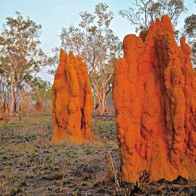 Termitière-Kimberley-Australie.jpeg