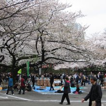 Parc Ueno - Tokyo - creative commons Wikimedia