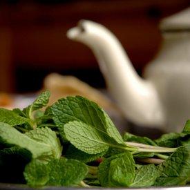 RévolThé Rêver la révolution autour d'un thé à la menthe Du son sur tes tartines