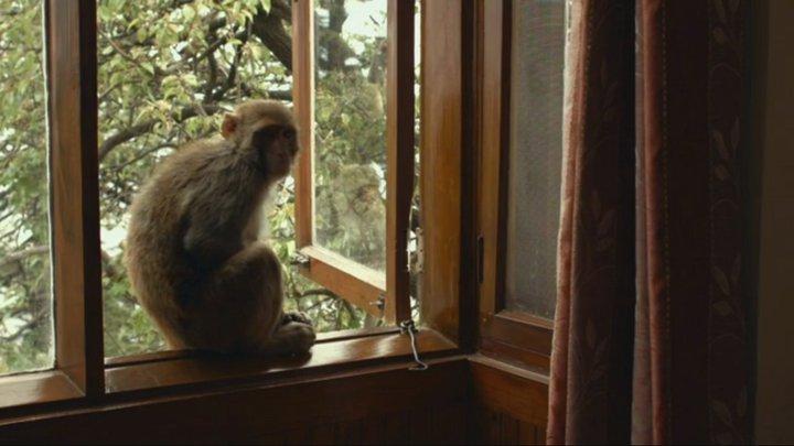 Va Toto 2 - film de Pierre Creton