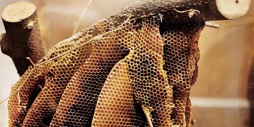 Le Musée de l'abeille
