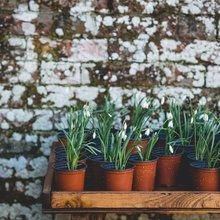 plantes+pot