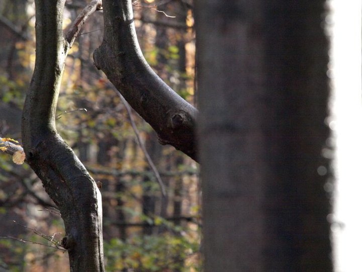 arbres ©Anne Versailles RS.jpg
