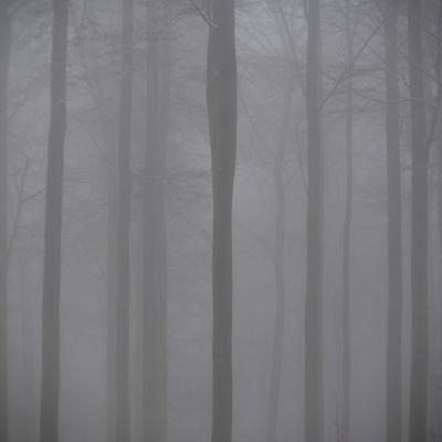 brume ©Anne Versailles RS.jpg
