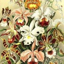 Fleurs, entre nature et culture