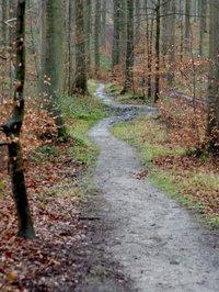 forêt ©Anne Versailles RS.jpg