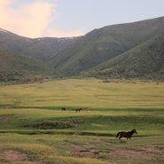 steppe du Kazakhstan